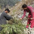 Zurück im Dorf begleitete ich meinen Guide und seine Frau beim Gras- und Holzsammeln.