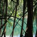 ebenso Lake Eacham...