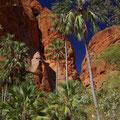 Die Palmen geben einen guten Kontrast zu den Felsen ab, ...