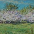 "Пешкин В.А. ""Цветущие вишни"".2008. Х.,м. 39х70"
