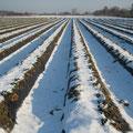 Ein Erdbeerfeld im Winter