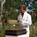 un cadre de miel