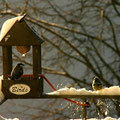 Ptičja hišica na našem balkonu