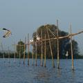 Möwen und Fischreiher schauen mal bei der Konkurrenz vorbei / Foto: Analena Severon