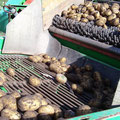 Kartoffelroder