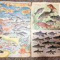親父の部屋を掃除していたら出て来た魚類図鑑(3歳の頃に記憶あり)