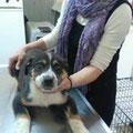Vincent beim Tierarzt zur 2. Puppyimpfung