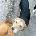 Ingrids kleine Hunde Familie welche sie noch in griechischen Familien unterbringen konnte