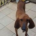 Harry das 12,5 kg Hundeskelett welchen Ingrid geholfen hat zu überleben