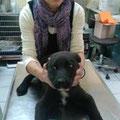 Finn zur 2. Puppyimpfung beim Tierarzt