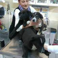 die 3 Feldwelpchen beim Tierarzt mit unserer Teodora
