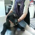 Tobby zur zweiten Puppyimpfung beim Tierarzt