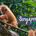 Singapore, Zoo