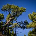 Parque Nacional de la Caldera de Taburiente, La Palma, Spanien