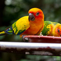Singapore, Birds Park