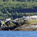 Raftsund, Lofoten, Norwegen