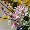 2月 ミモザ(黄)/勿忘草(ブルー)/サイネリア(ピンク)/クリスタルリリー(ワイン)/レースフラワー(ホワイト)