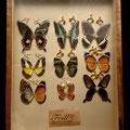 本物の蝶の翅を使用しています。
