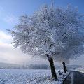 baum mir rauhreif im winter