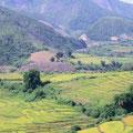 Ein Tal mit Reisfeldern – die einzelnen Felder sind in Terrassen angelegt und greifen wie Puzzlesteine ineinander