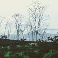 Blaue Stunde mit Teegarten und Nebel