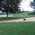 vue du gîte rural le Vieux Domaine au Masbareau, en Limousin, Haute-Vienne, Nouvelle-Aquitaine