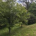 Naturgarten bei Juste