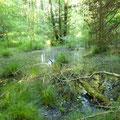 NSG Sumpf Lambsbachtal