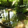Lambsbach am Sumpfgebiet NSG