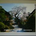 写真・旧中山道の原(12班・平岩さん)