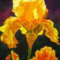 """ Golden Iris"""