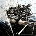 Fairlane Rainscape