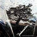 Fairlane Rainscape