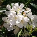 Blütenprach