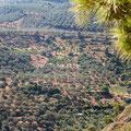 Olivenhaine umgeben Kerinia