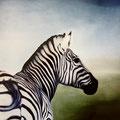 Zebra   Öl auf Leinwand  80cm x 80cm  1996