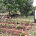 Jardin des aromates Bio camping à la ferme Ardèche Rosières
