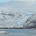 riesige Gletscher fast bis zum Meer