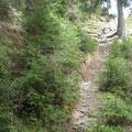 zt. bleibt der Trail im Urzustand