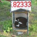 bitte nicht anrufen, die Katze schläft!
