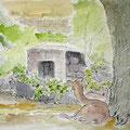 奈良公園の鹿(4号)