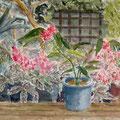花の文化園 アルシュ5号