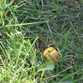 Фактор случайности затерялся в траве