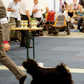 CACIB Gießen 2012_Kalsang´s European Tri-Star at DW Jugendklasse [Youth Class] V1 JCAC Club & VDH & BOB Junior