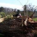 La mascotte Elsia sur son tronc