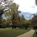 der Schlosspark in Singen (Landesgartenschau 2000)