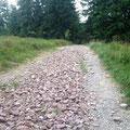 wer nur hat diesen Weg angelegt. Sch... Steine