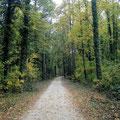 Herbst ist im Stadtwald Singen