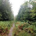 ... immer weiter durch den nassen Schwarzwald