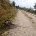 Ein einsamer Schuh am Sandkopf (954m). Wer nur hat den verloren?